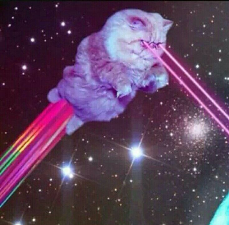 Cat Shooting Lasers Out Of Its Eyes